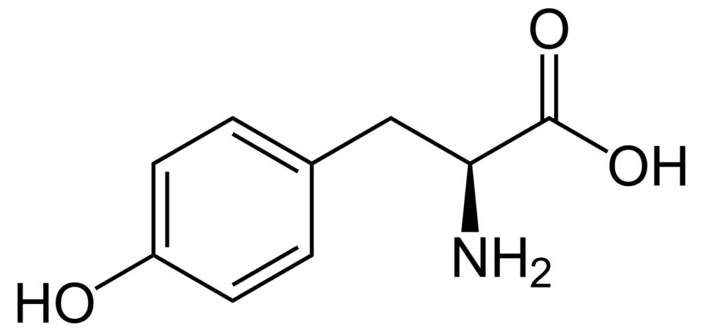 N-Acetyl L-Tyrosine: Benefits, Dosage & FAQs - Nootropics
