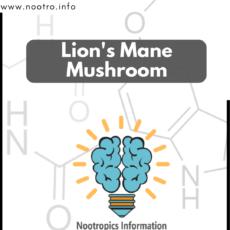 buy lions mane mushroom
